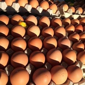 eggslargekt